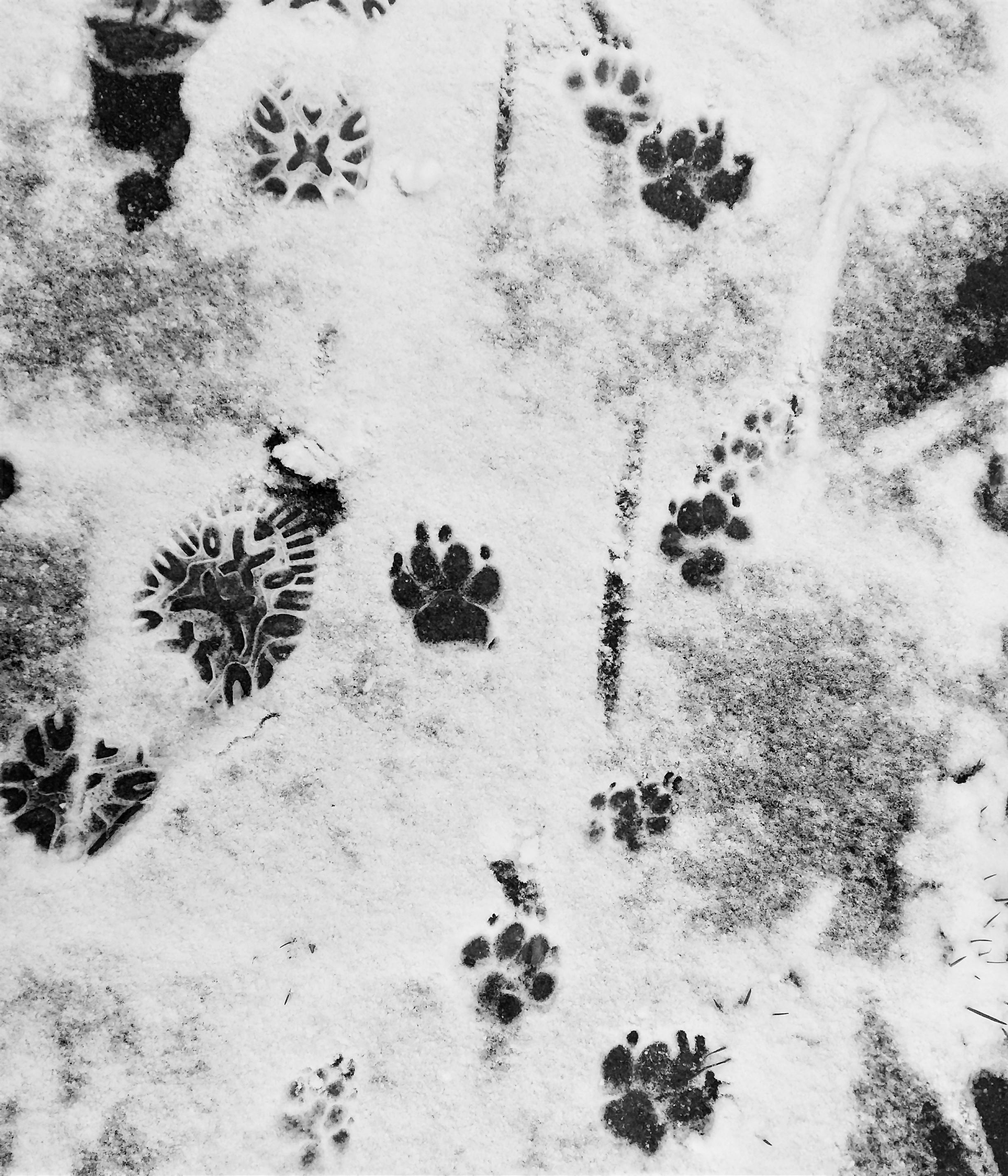 pootjes in de sneeuw in IJsselstein