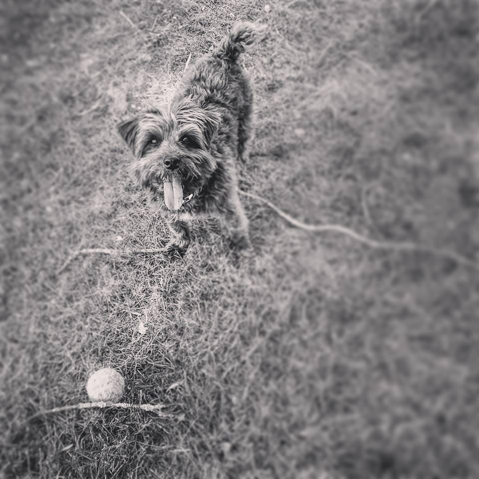 Hond Zoe met bal in IJsselstein